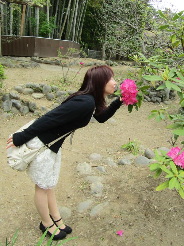 春日部 牛島の藤